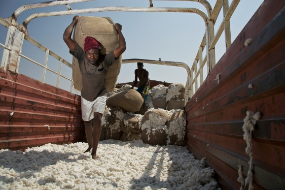 Man in Tanzania carrying bag of cotton in the back of a truck